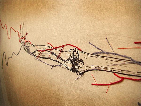 anatomy-3