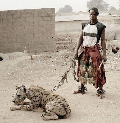 hyenamax3