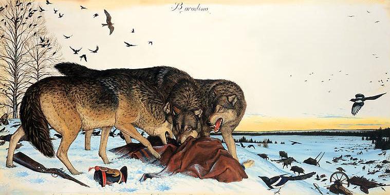 Borodino_Wolves